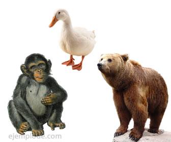 Animales omníveros.