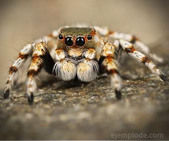 Las arañas cazan insectos y los envuelven en telaraña.