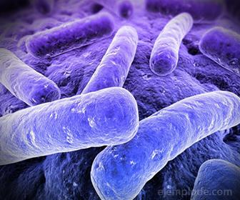 Apariencia de las Bacterias Bacilos