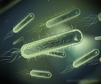 Bacterias espirilos