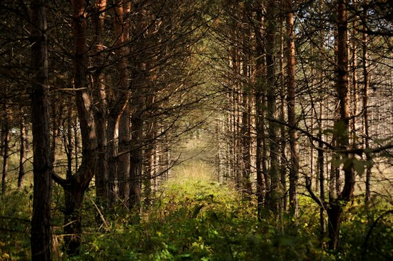 caracter sticas del bosque