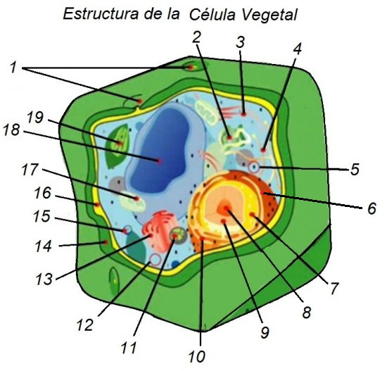 Características De Las Células Vegetales