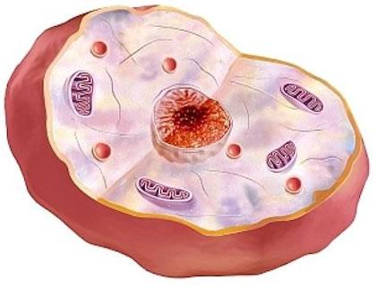 Características de la célula