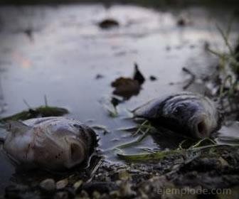 Los ecosistemas desparecen por el extremo cambio del clima.