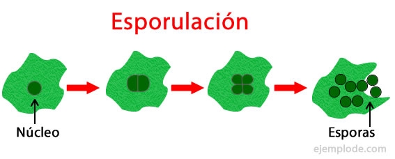 Significado de la palbra asexual reproduction