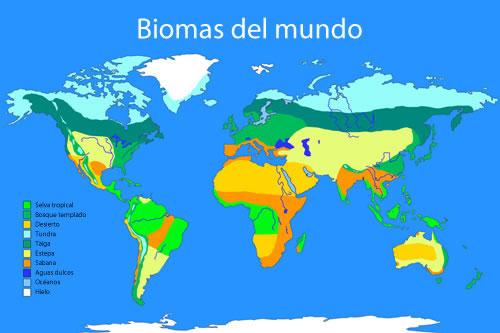 Mapa de Biomas en el mundo