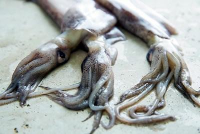 Características de los moluscos