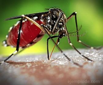 Por el cambio climático han migrado animales insectos y con ellos enfermedades peligrosas.