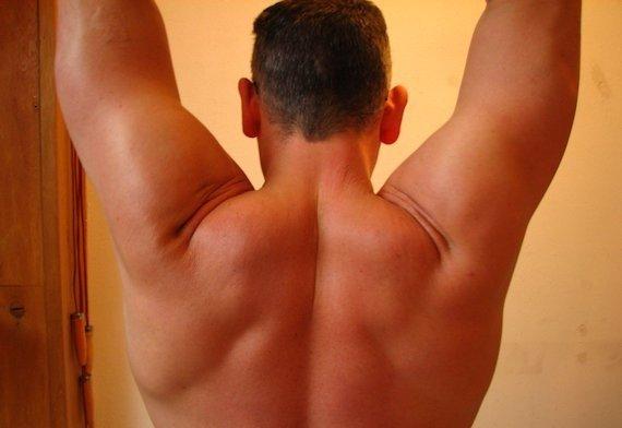 La musculatura y sus características