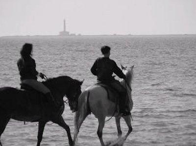 Ejemplo de mutualismo, los caballos