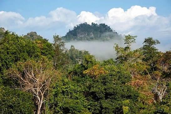 Características de la selva