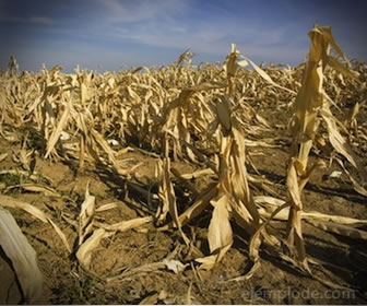 La sequía es la disminución de la humedad en forma extrema.