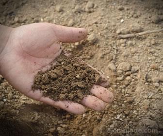 La tierra es el recurso básico para el mantenimiento de las plantas y el ganado.