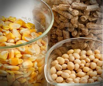 Se llama biomasa a la energía producida con plantas