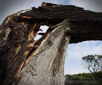 El quiebre sucede después de la elongación en la madera