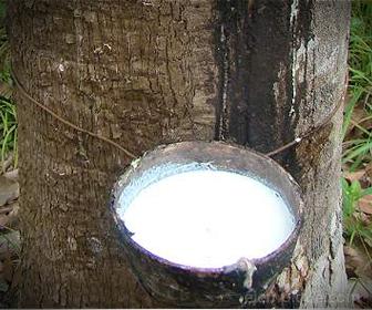 El caucho es un material aislante que se puede extraer un árbol o del petróleo.