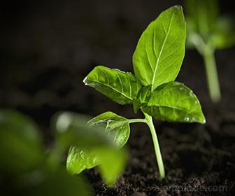 Dioxido de carbono absorbido en Fotosintesis