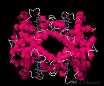 Hemoglobina. El CO se liga a ella