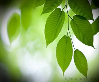 Especies vegetales en fotosintesis